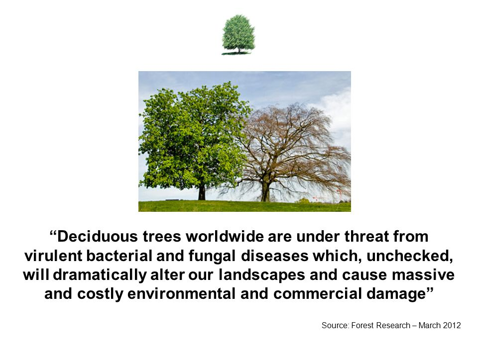 Deciduous trees worldwide are under threat from virulent bacterial and fungal diseases which, unchecked, will dramatically alter our landscapes and cause massive and costly environmental and commercial damage