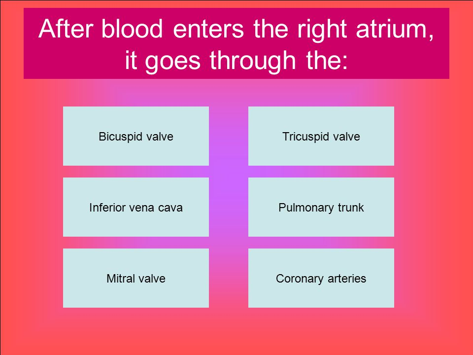 After blood enters the right atrium, it goes through the: