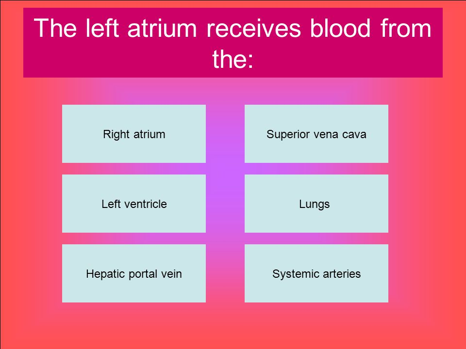 The left atrium receives blood from the: