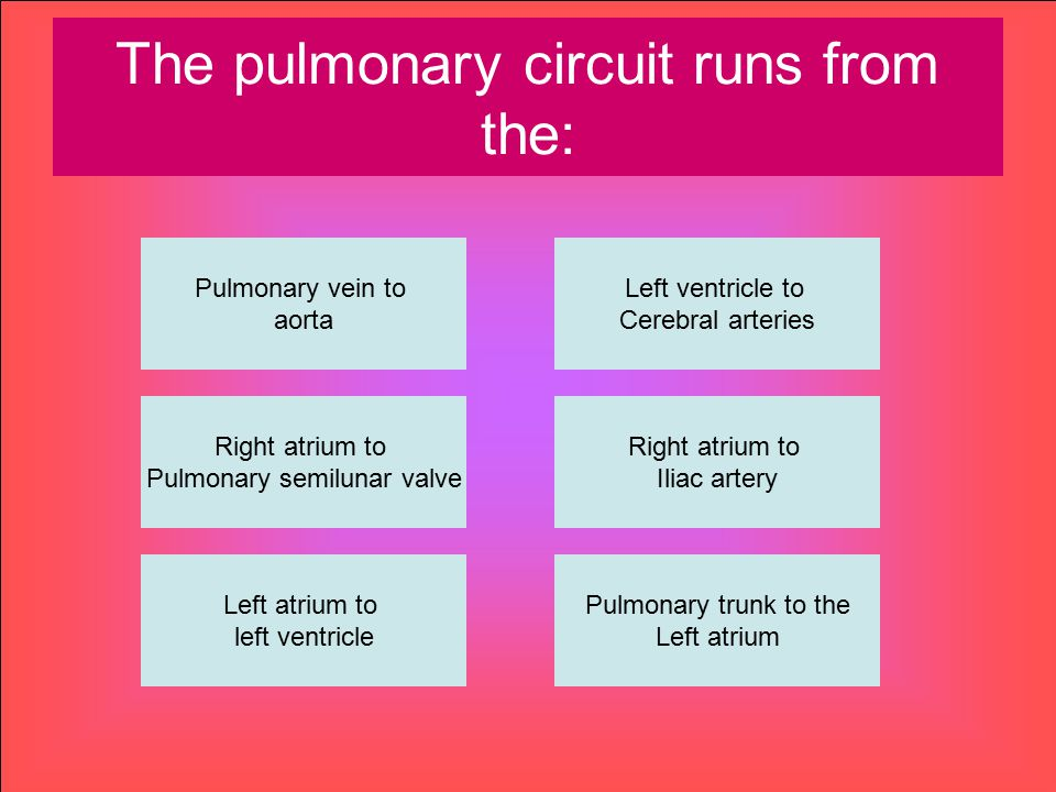 The pulmonary circuit runs from the: