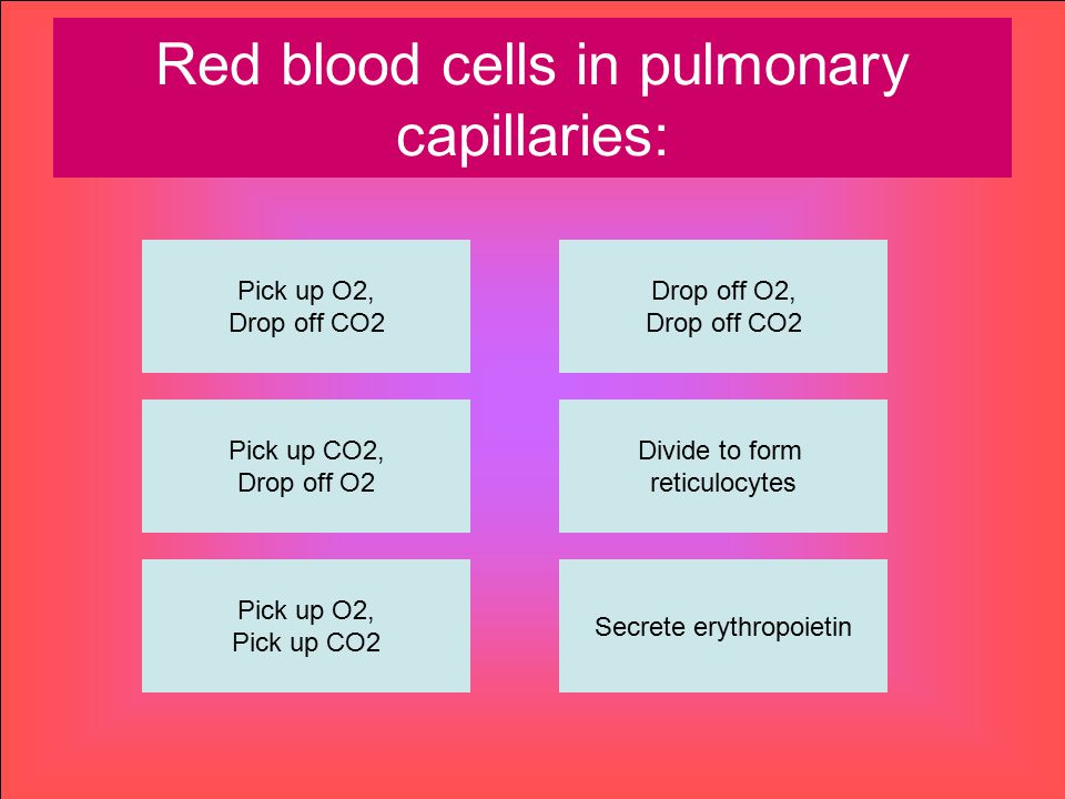 Red blood cells in pulmonary capillaries: