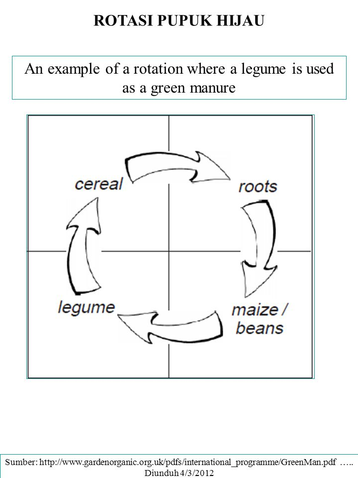 An example of a rotation where a legume is used as a green manure
