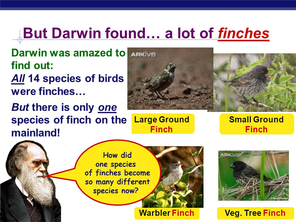 But Darwin found… a lot of finches