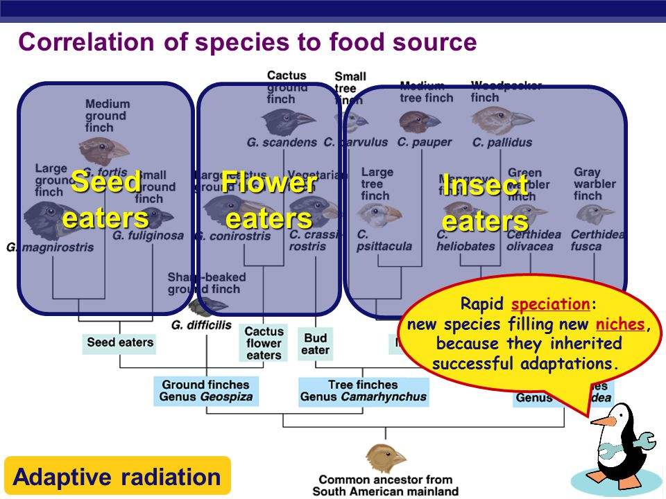 Correlation of species to food source