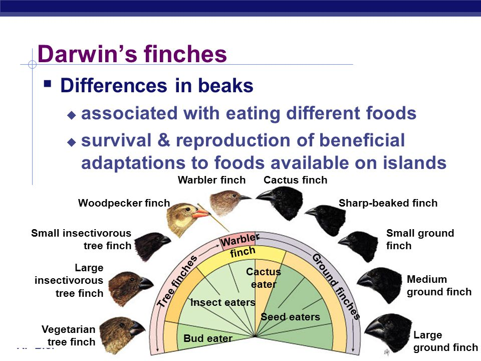 Darwin's finches Differences in beaks