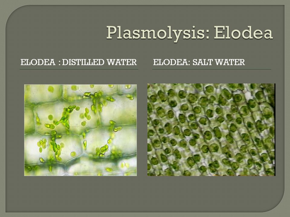 Review the Plasmolysis - ppt video online download