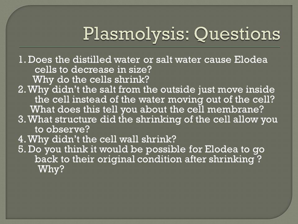 Plasmolysis: Questions