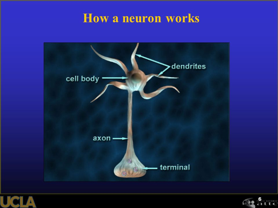 How a neuron works Instructions