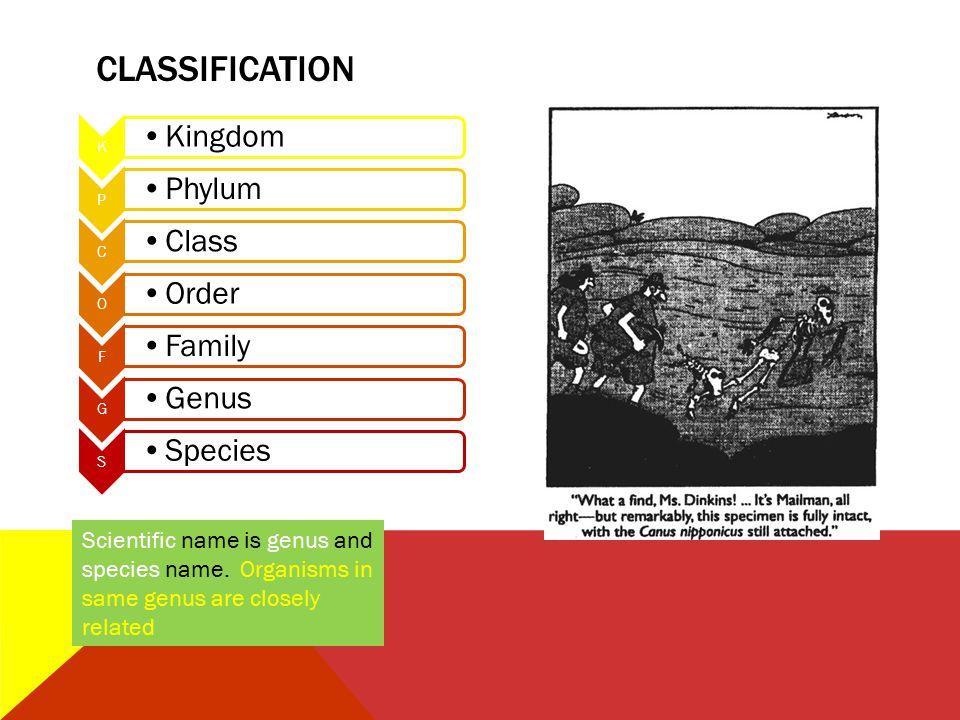 CLASSIFICATION K. Kingdom. P. Phylum. C. Class. O. Order. F. Family. G. Genus. S. Species.