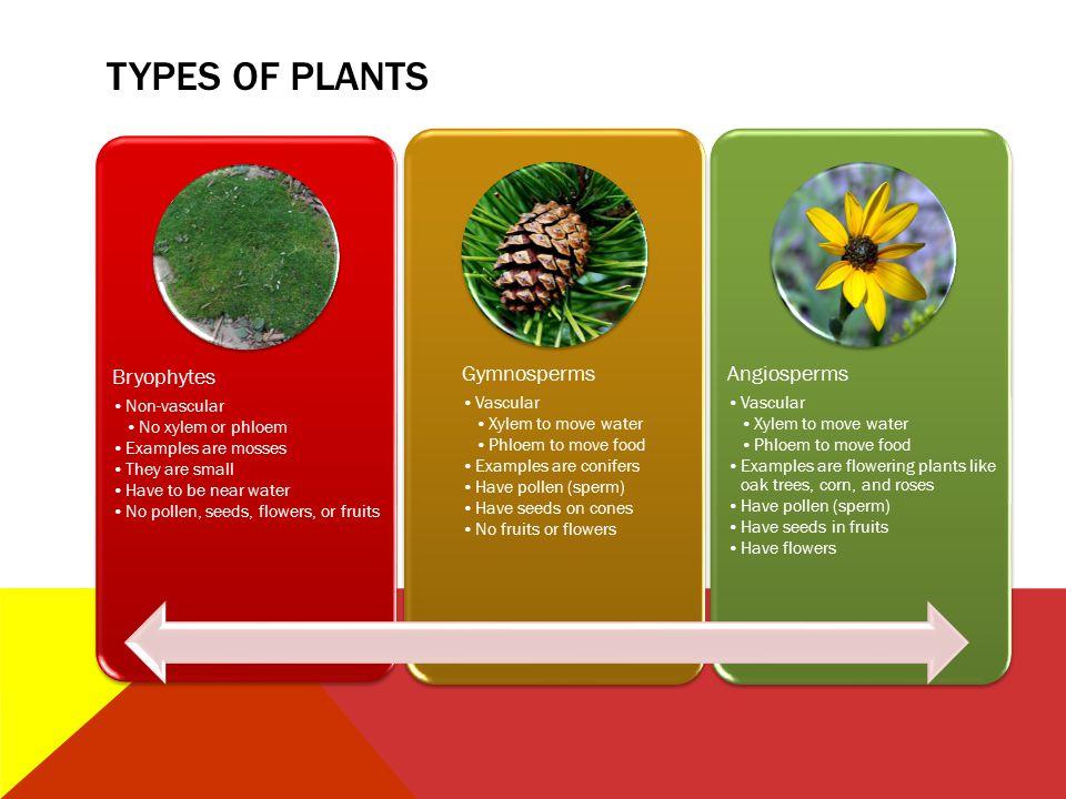 Types of Plants Bryophytes Non-vascular No xylem or phloem