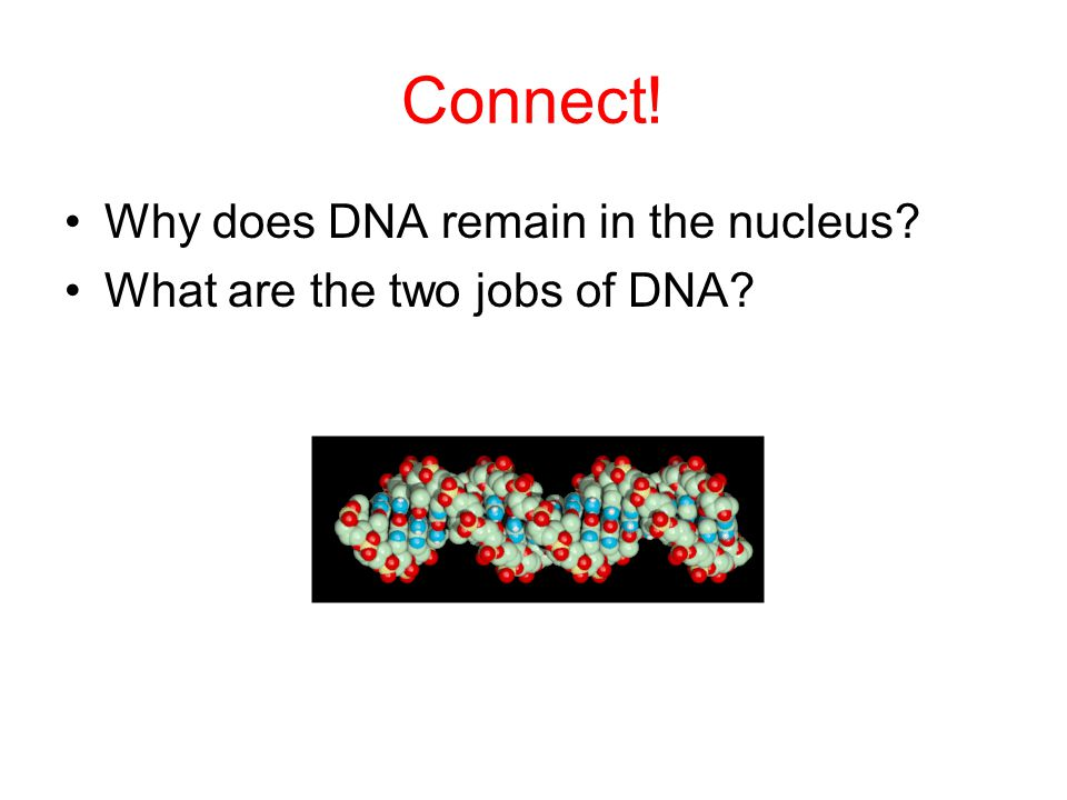 Connect! Why does DNA remain in the nucleus