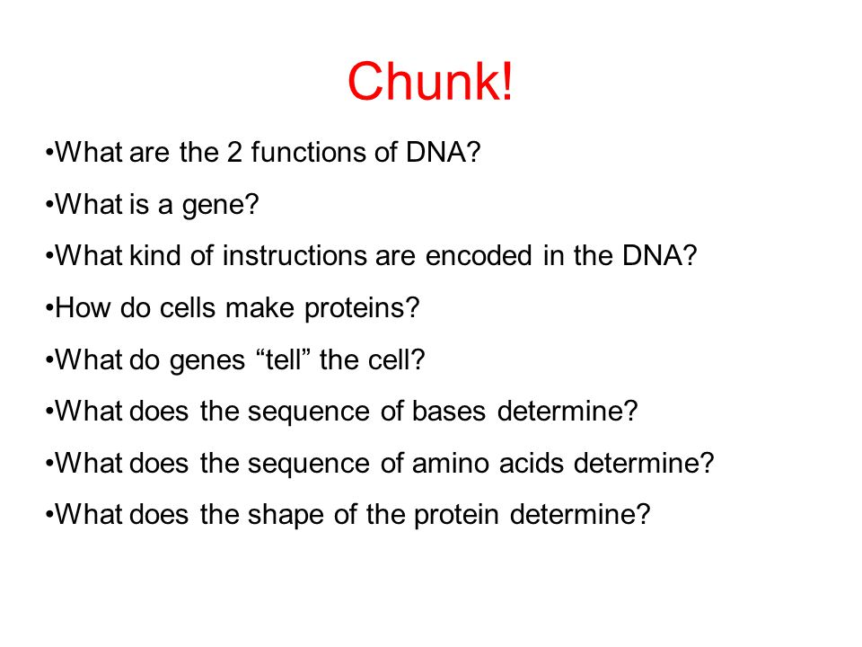 Chunk! What are the 2 functions of DNA What is a gene