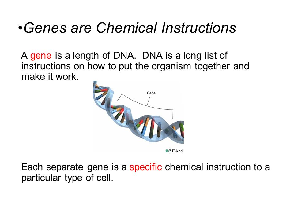 Genes are Chemical Instructions