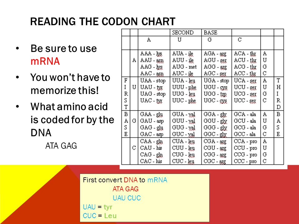 READING THE CODON CHART