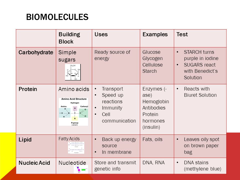 biomolecules Building Block Uses Examples Test Carbohydrate