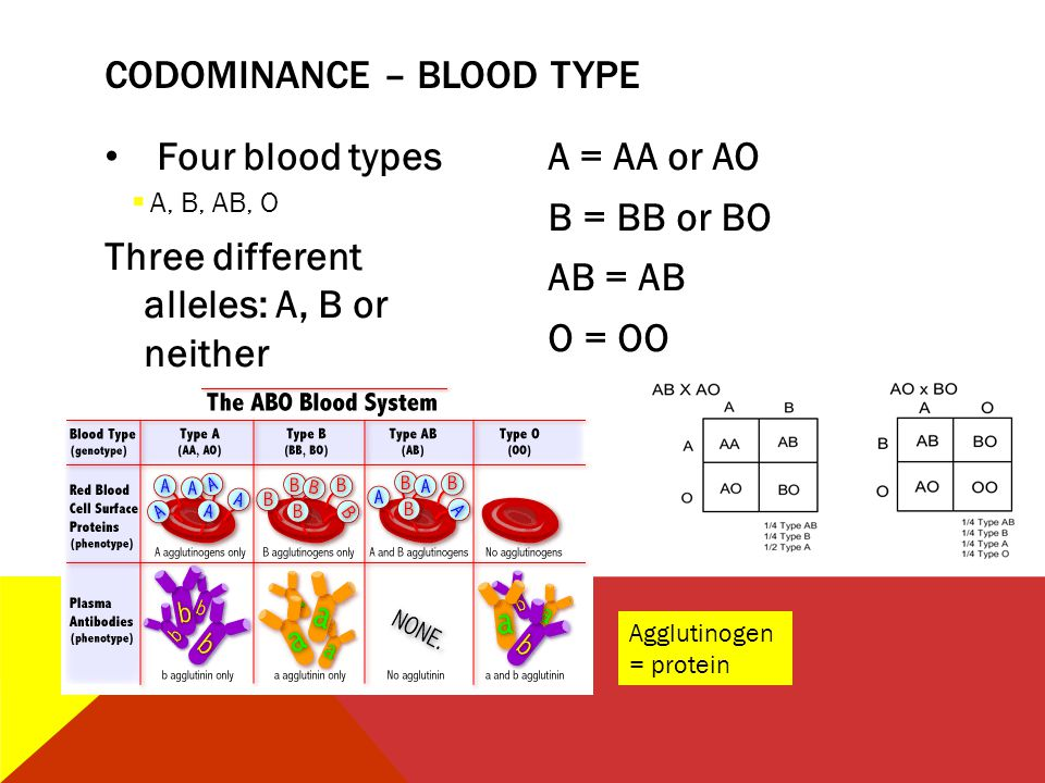 CODOMINANCE – BLOOD TYPE
