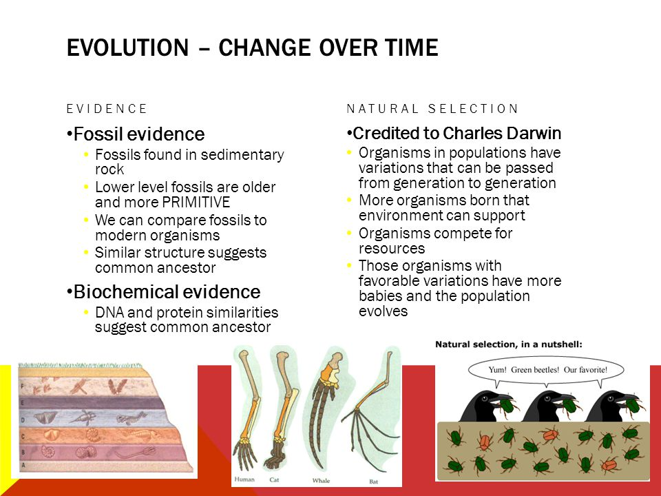 EVOLUTION – change over time