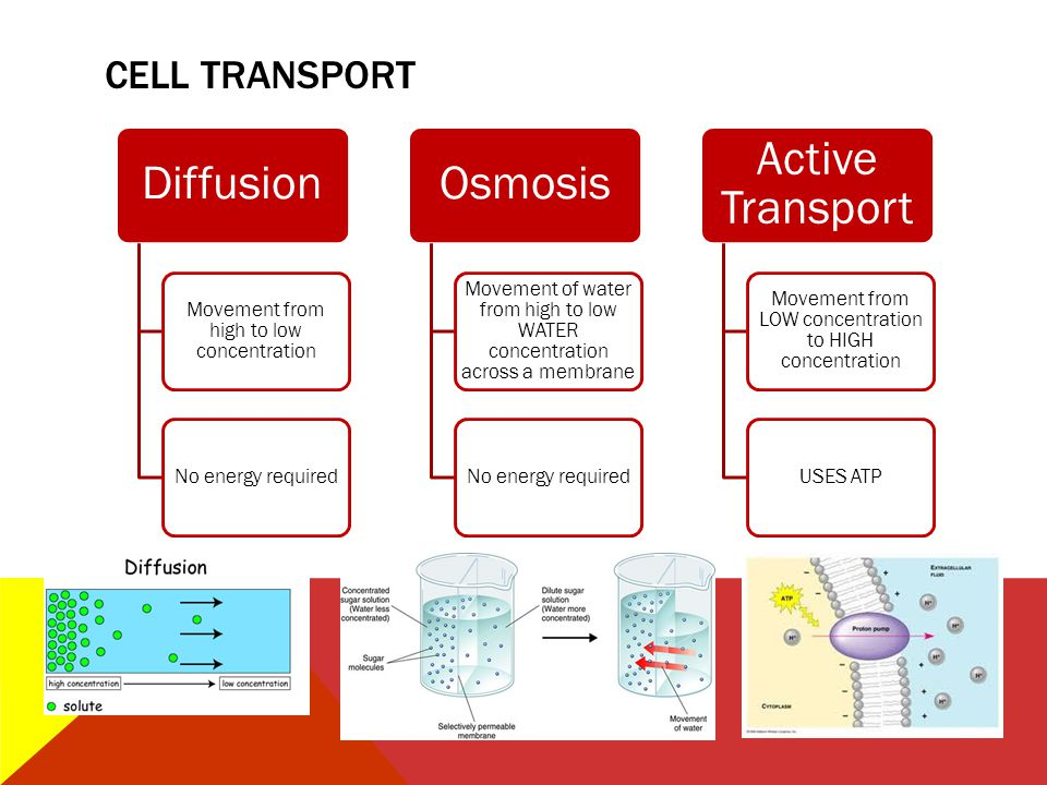 Diffusion Osmosis Active Transport CELL TRANSPORT