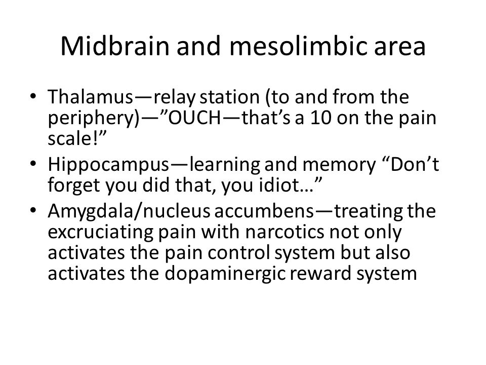 Midbrain and mesolimbic area