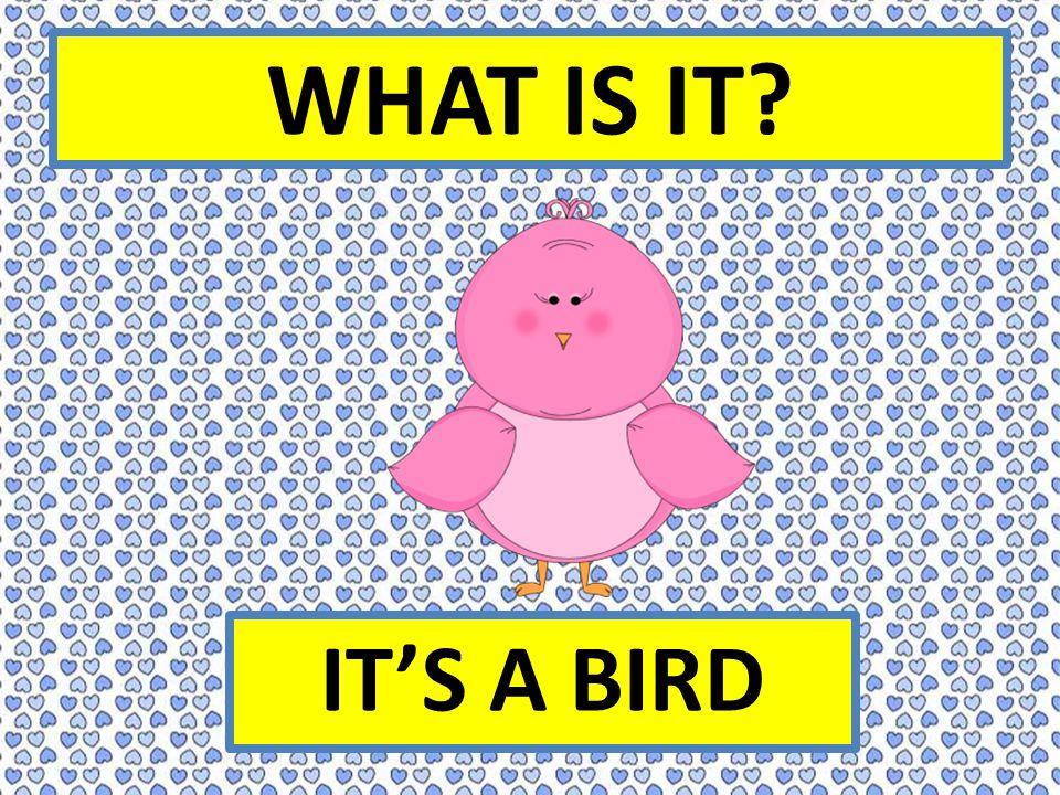 WHAT IS IT IT'S A BIRD