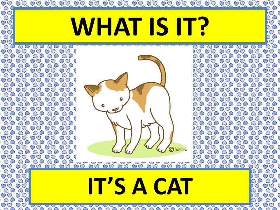 WHAT IS IT IT'S A CAT