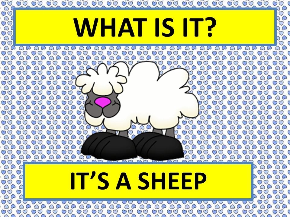 WHAT IS IT IT'S A SHEEP