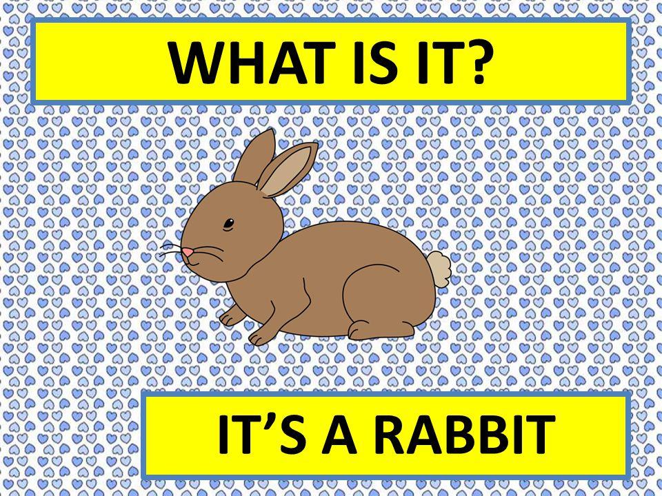 WHAT IS IT IT'S A RABBIT
