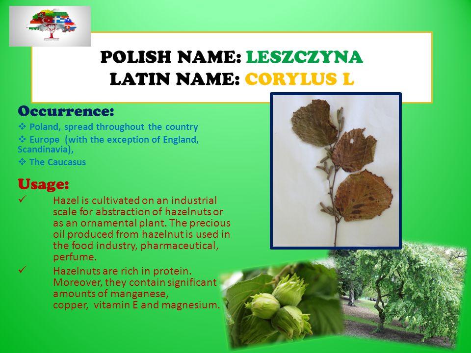 POLISH NAME: LESZCZYNA LATIN NAME: CORYLUS L