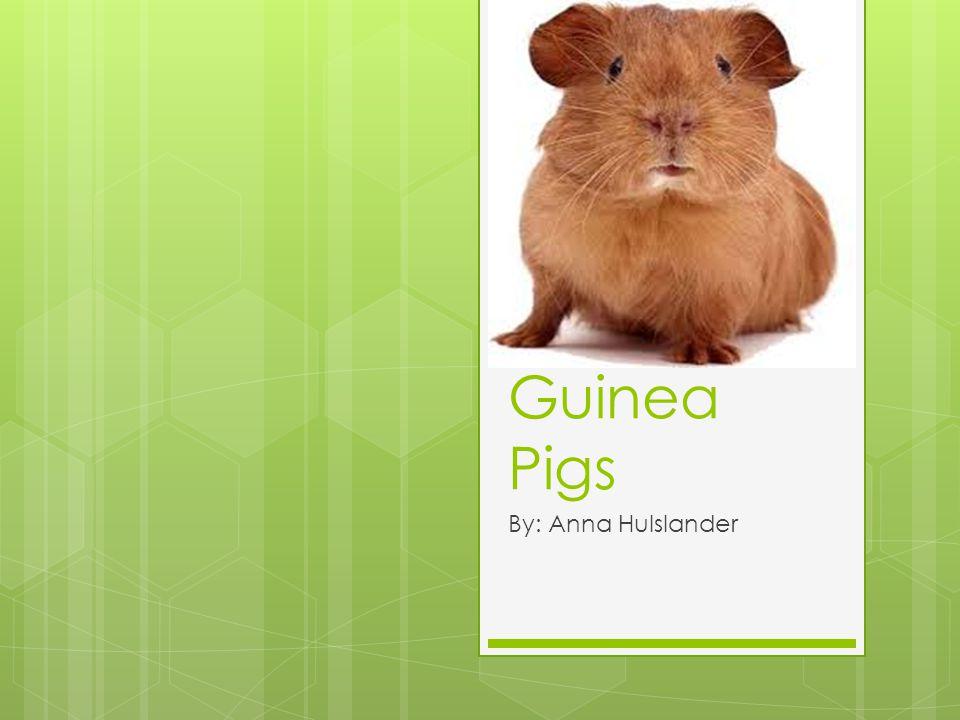Guinea Pigs By: Anna Hulslander