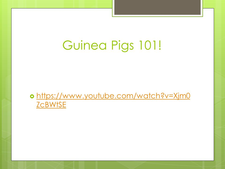 Guinea Pigs 101! https://www.youtube.com/watch v=Xjm0ZcBWtSE