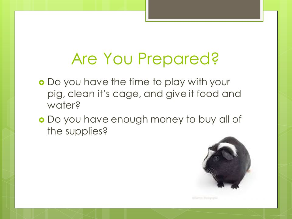 Are You Prepared Do you have the time to play with your pig, clean it's cage, and give it food and water
