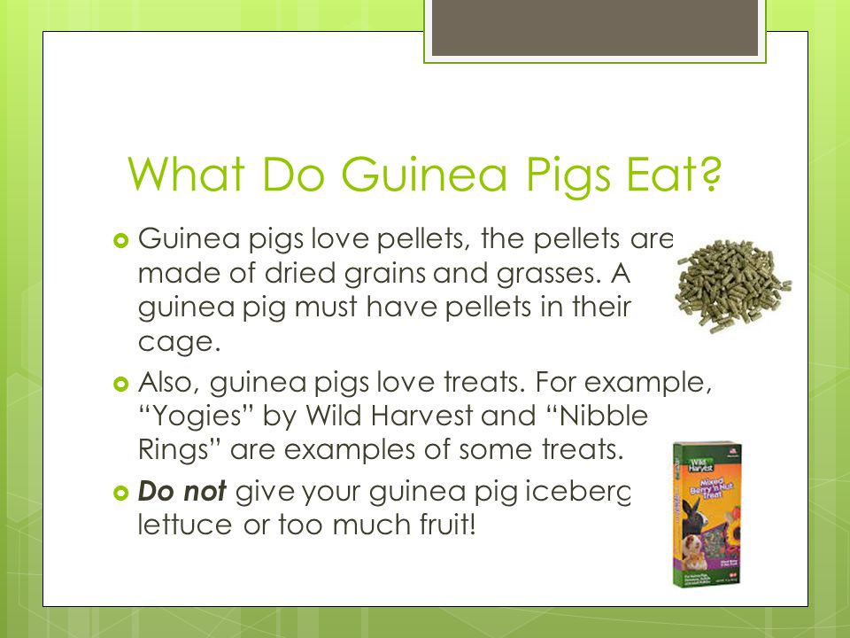 What Do Guinea Pigs Eat Guinea pigs love pellets, the pellets are made of dried grains and grasses. A guinea pig must have pellets in their cage.
