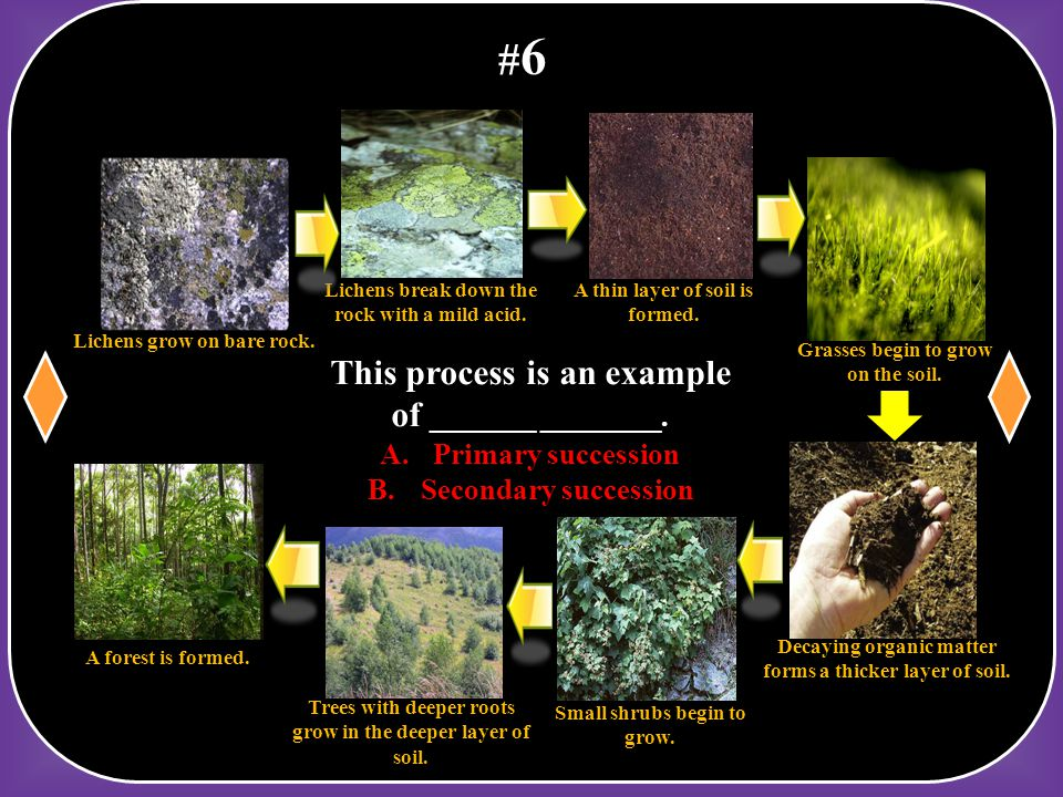 #6 This process is an example of _______ ________. Primary succession