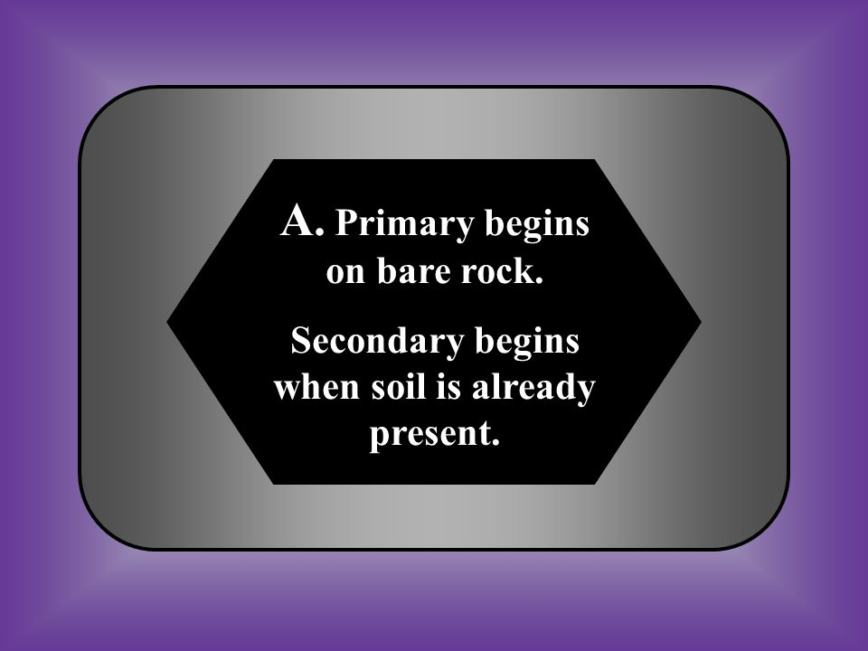 A. Primary begins on bare rock.