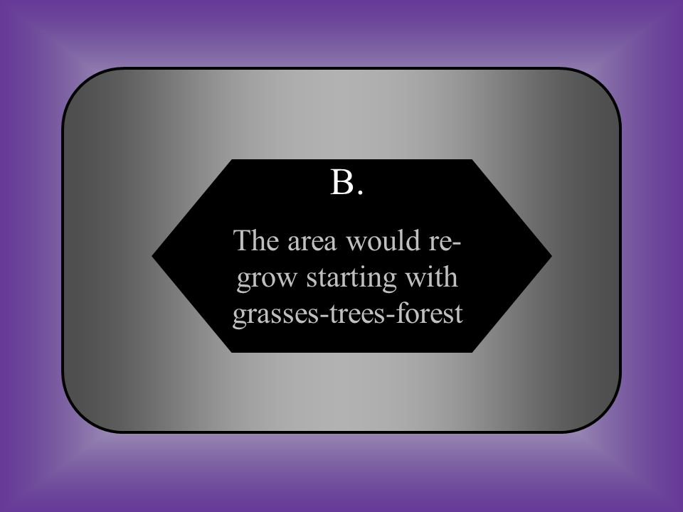 The area would re-grow starting with grasses-trees-forest
