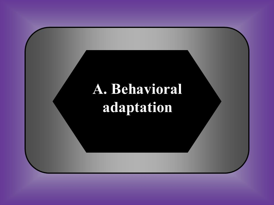 A. Behavioral adaptation