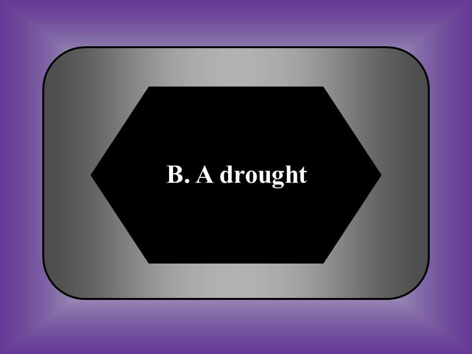 B. A drought