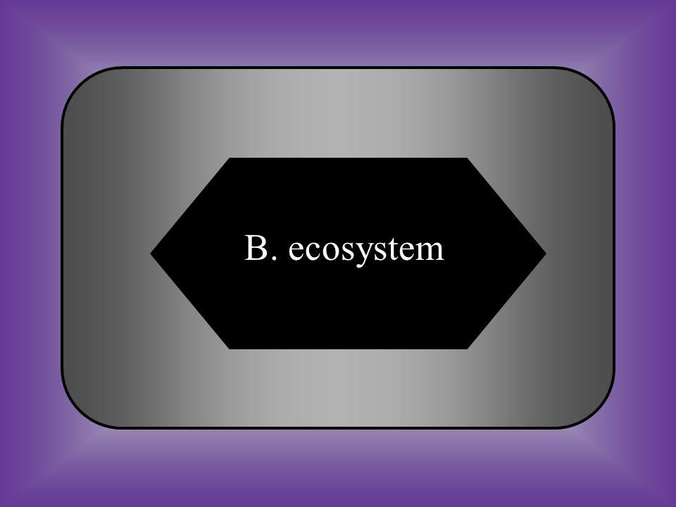 B. ecosystem