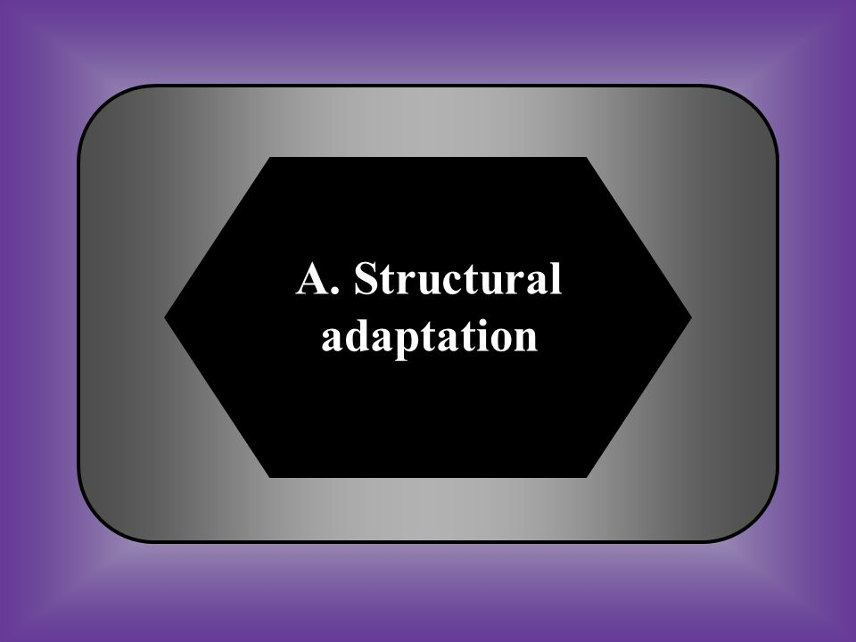 A. Structural adaptation