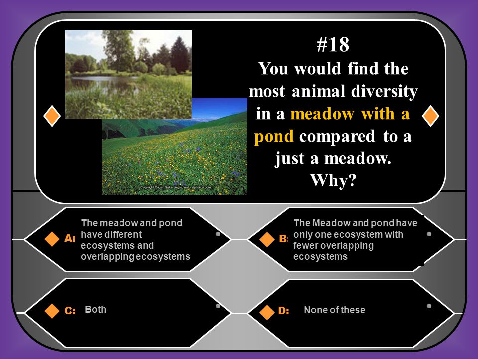 #18 You would find the most animal diversity in a meadow with a pond compared to a just a meadow. Why