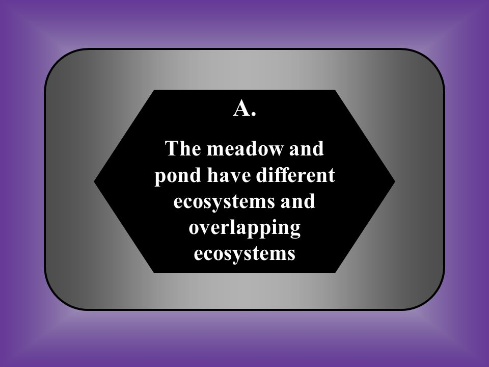 A. The meadow and pond have different ecosystems and overlapping ecosystems