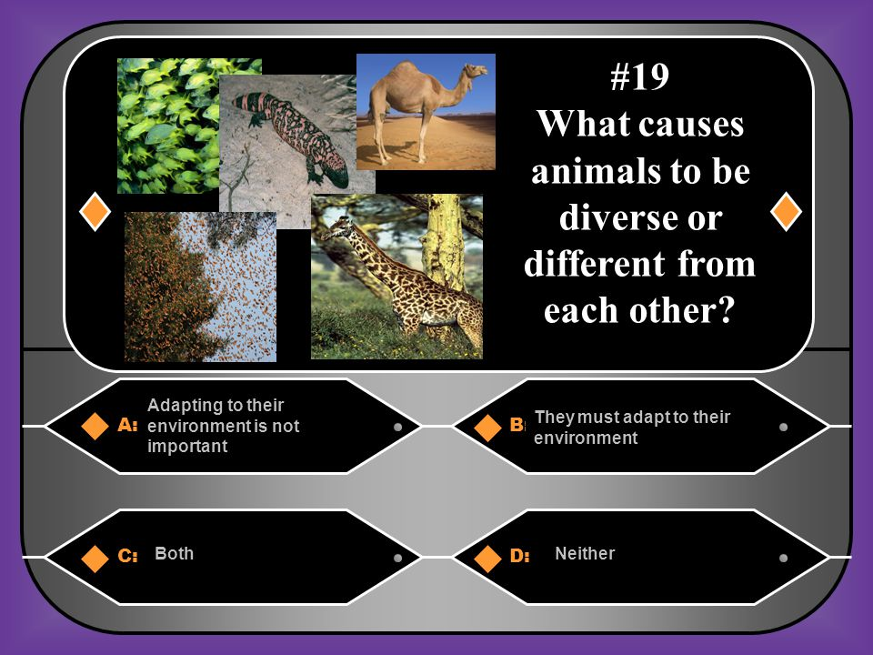 What causes animals to be diverse or different from each other