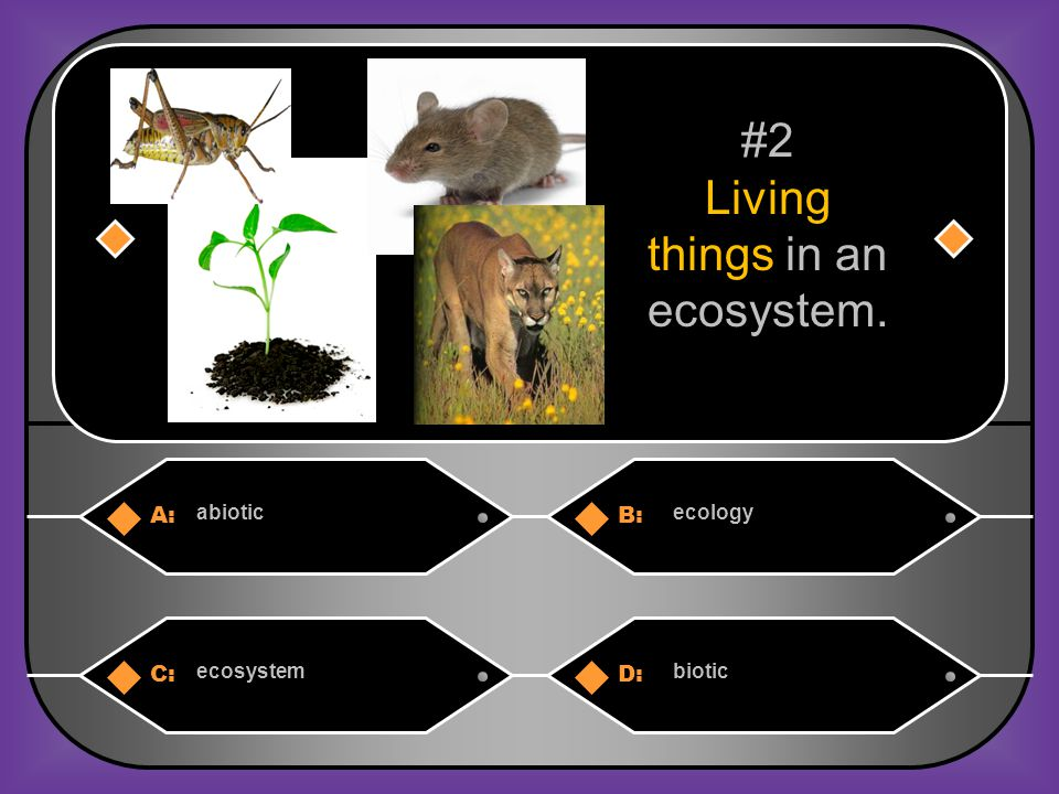Living things in an ecosystem.