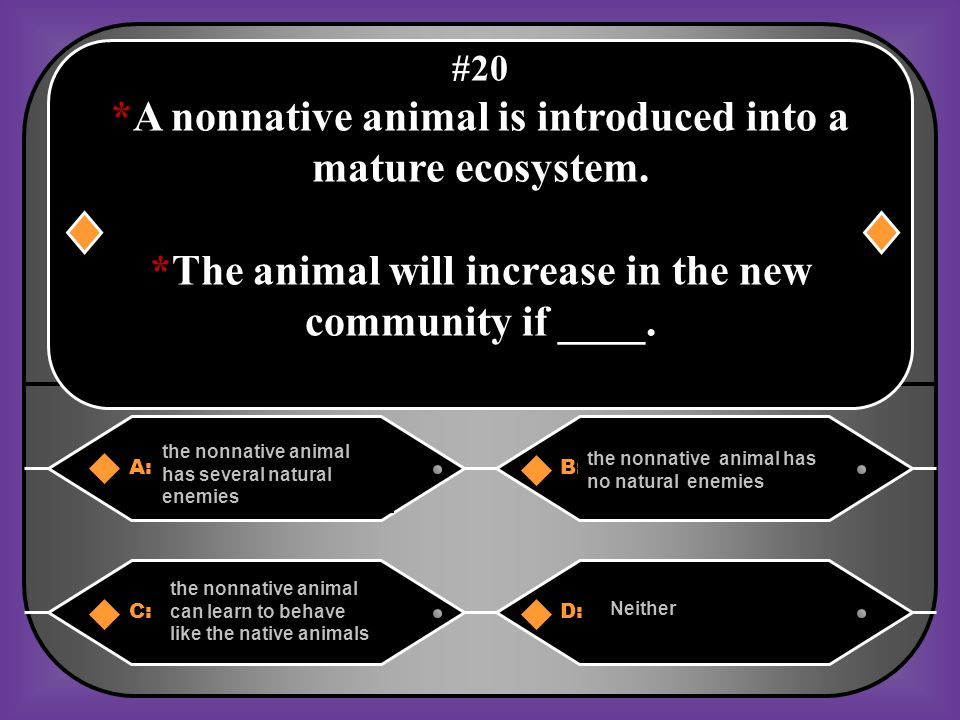 *A nonnative animal is introduced into a mature ecosystem.