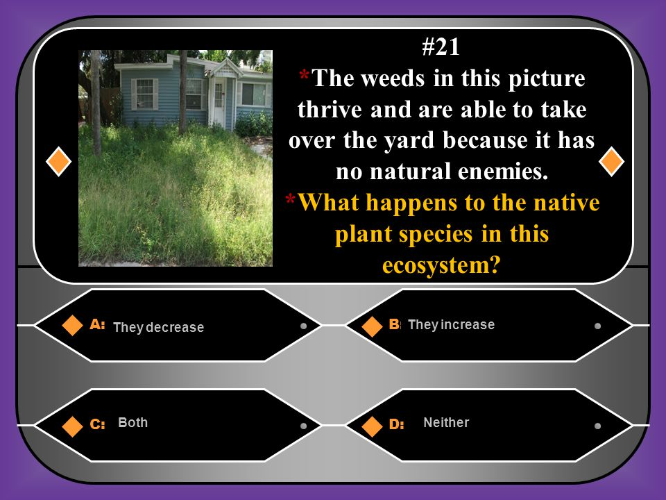 *What happens to the native plant species in this ecosystem