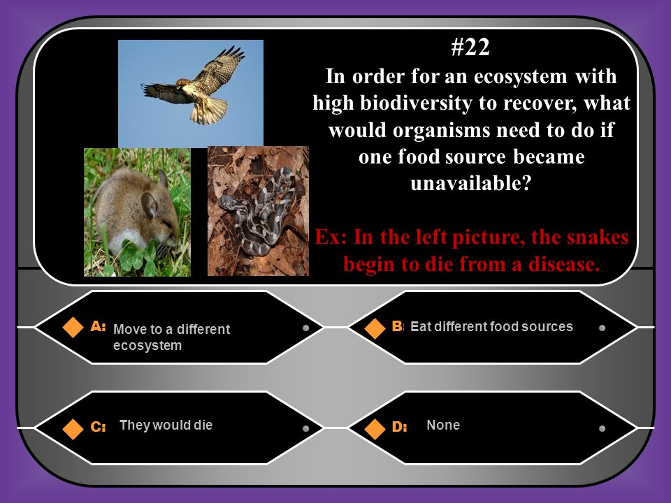 Ex: In the left picture, the snakes begin to die from a disease.