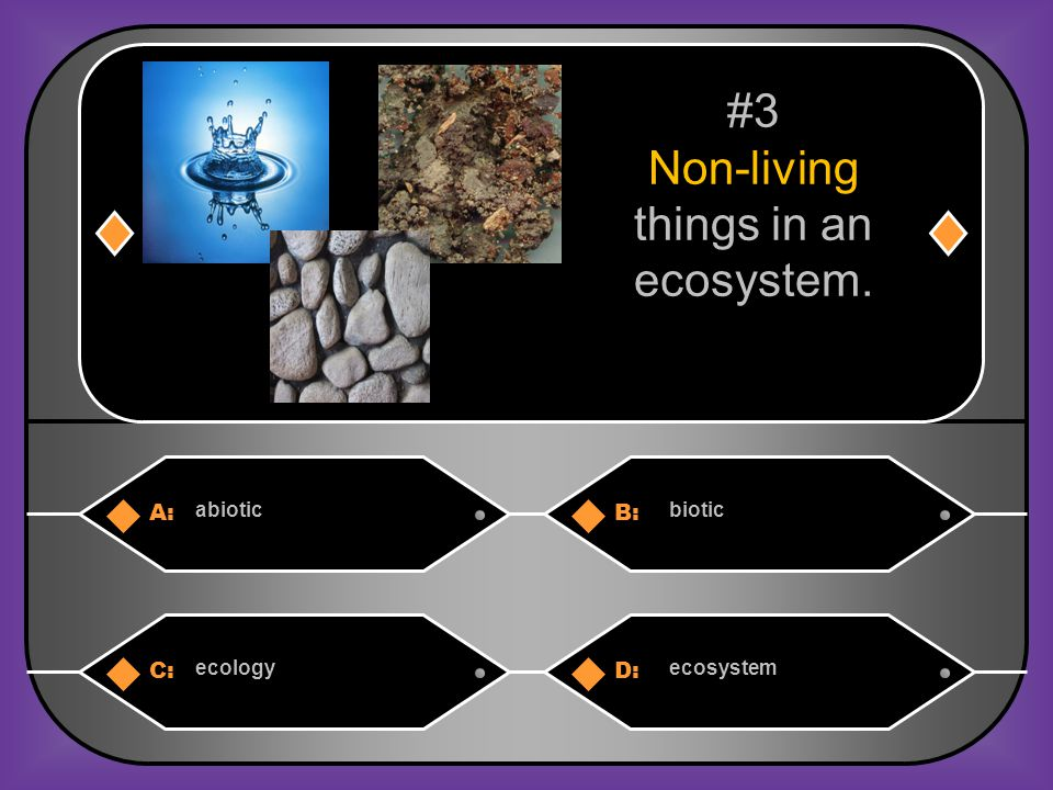 Non-living things in an ecosystem.