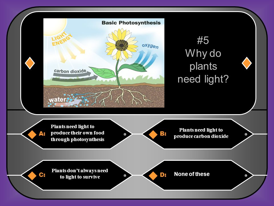 Why do plants need light