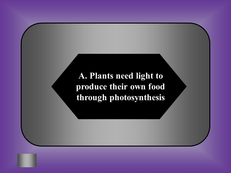 A. Plants need light to produce their own food through photosynthesis