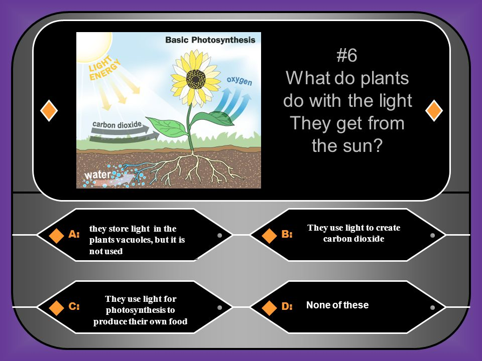 What do plants do with the light They get from the sun